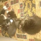 Отдам котят в хорошие руки - 40104.jpg
