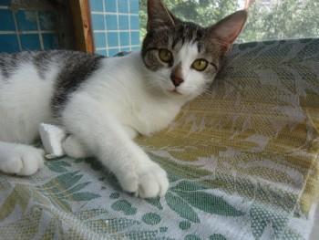 Ласковый котенок в добрые руки - DSC02064_500x375.jpg
