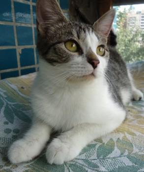 Ласковый котенок в добрые руки - DSC02052_cr1_500x598.jpg