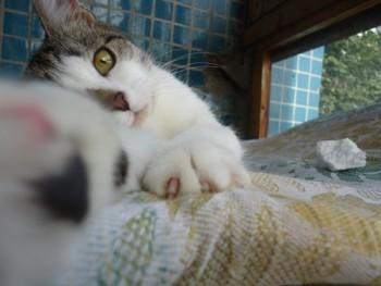 Ласковый котенок в добрые руки - DSC02055_500x375.jpg